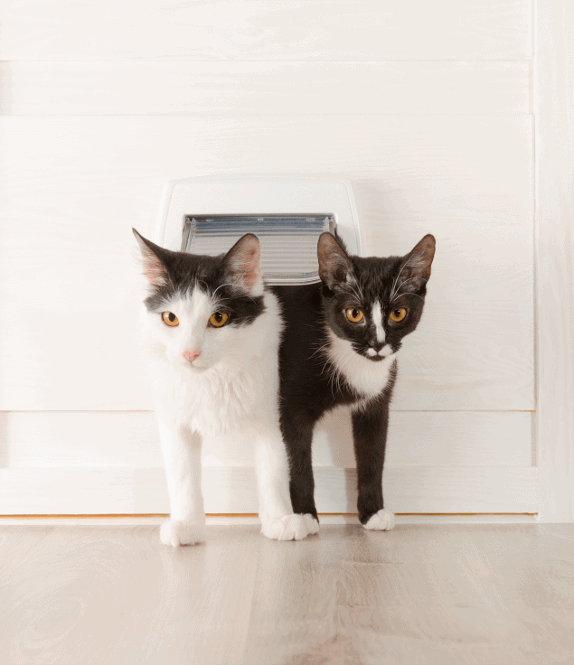 Keep Your Cat Safe With Cat Flaps