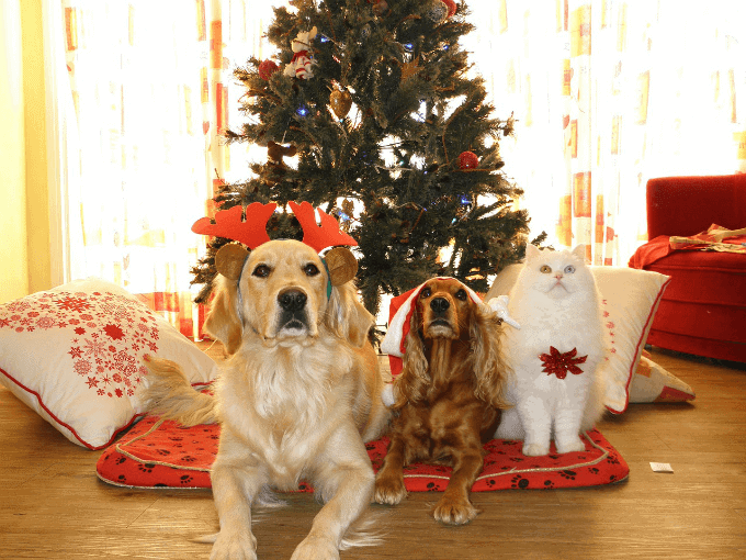 Keeping Pets Safe During the Holidays!
