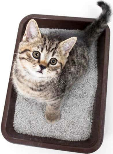 Preventing Litter Box Dilemmas