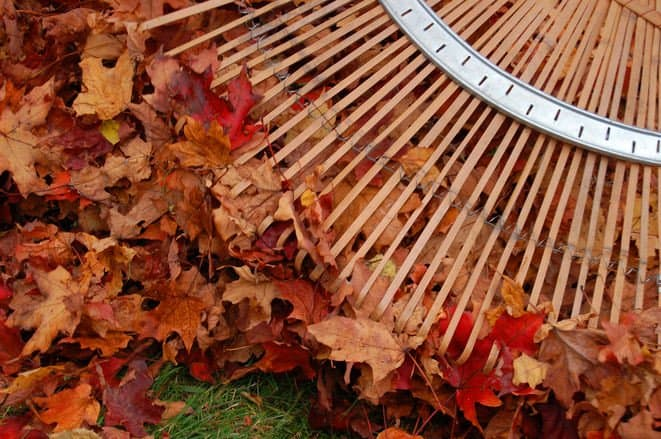 How to Simplify Fall Leaves Cleanup