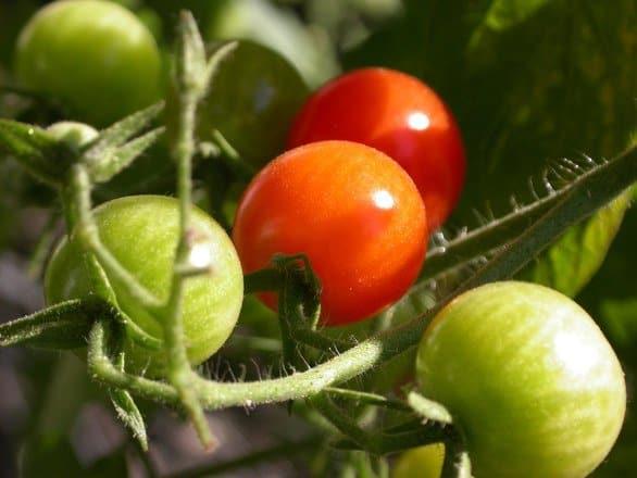 Preserving Your Garden Harvest