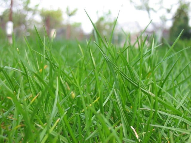 Reviving Your Lawn After a Harsh Winter & Wet Spring