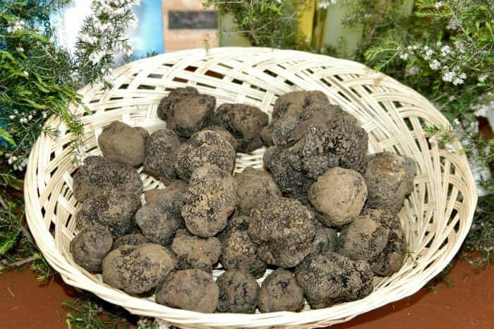Truffle Season in Italy