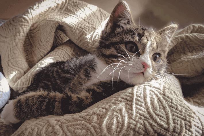 kitten sleeping on an aran blanket