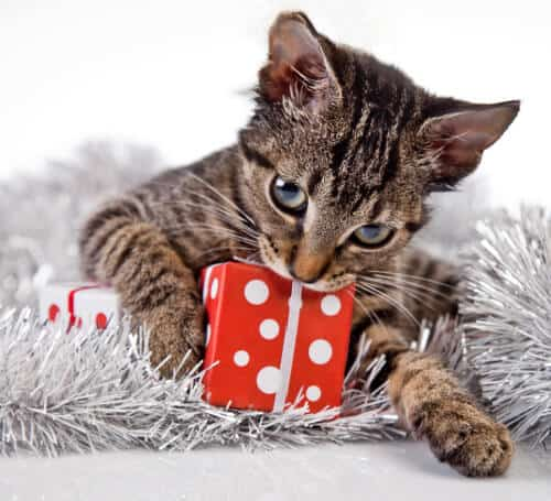 Cat holding a Christams gift.- Depositphotos